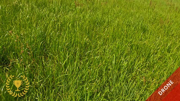 Thumbnail for Flight Over Green Grass
