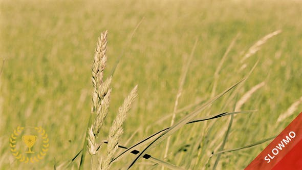 Thumbnail for Wheat Field in the Wind