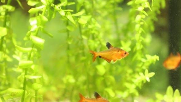 Thumbnail for Fish In An Aquarium
