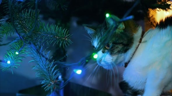 Thumbnail for Cute cat playing with Christmas tree ornament. balloons and garlands. the atmosphere of the festival