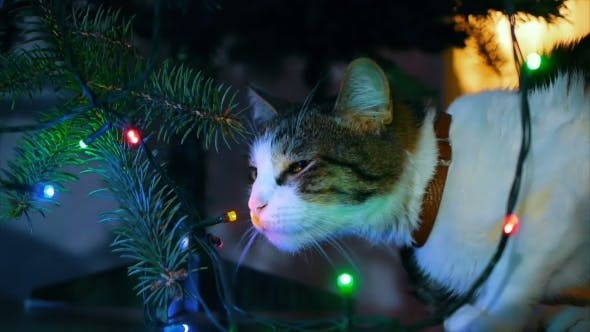 Thumbnail for Cute Cat Playing With Ornament On Christmas Tree