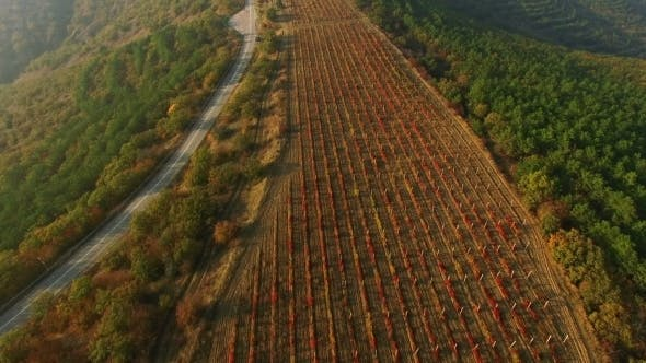 Thumbnail for Flying Above Autumn Forest With Vineyard Field