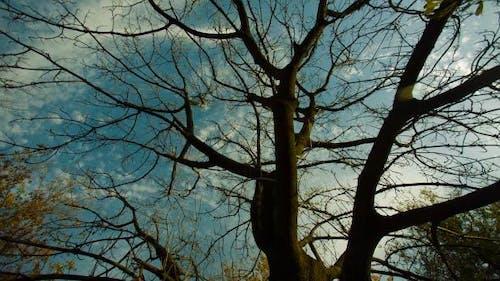 Nakter Herbstbaum