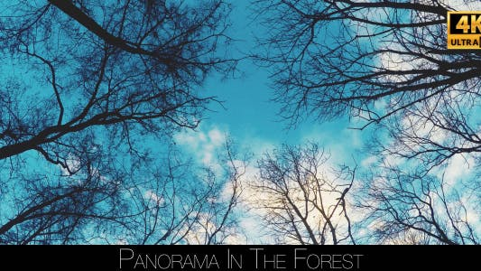 Thumbnail for Panorama In The Forest 5