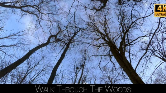 Thumbnail for Walk Through The Woods 30