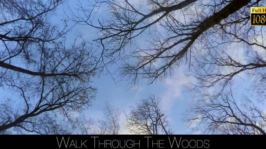 Cover Image for Walk Through The Woods 29