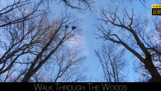 Thumbnail for Walk Through The Woods 31