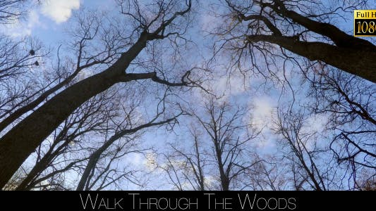 Thumbnail for Walk Through The Woods 32