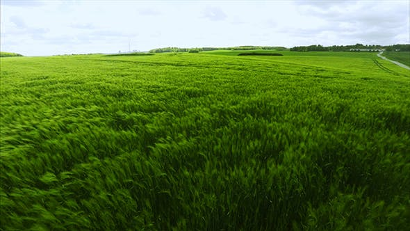Thumbnail for Aerial View of a Green Field During Summer