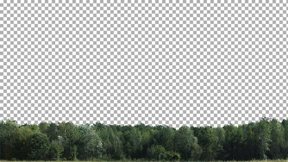 Thumbnail for Real Trees Isolated 2 (strong wind)