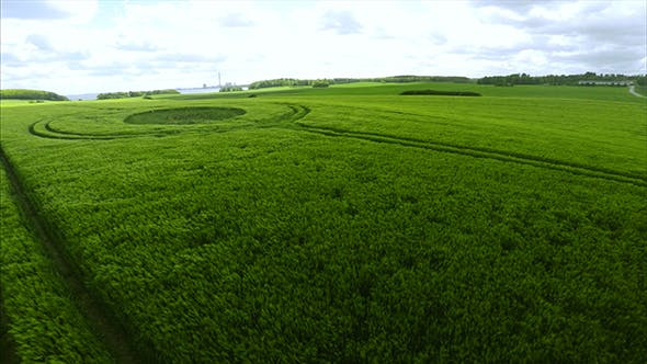 Thumbnail for Large Green Field Shot in the Summer Season