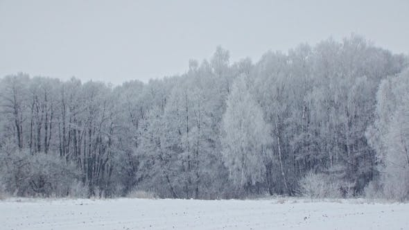 Thumbnail for Mysterious Snowy Frosty Forest Winter Landscape