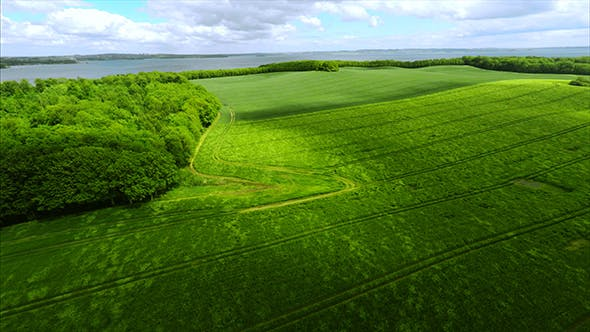 Thumbnail for Large Green Field In Summer Season View From The Top