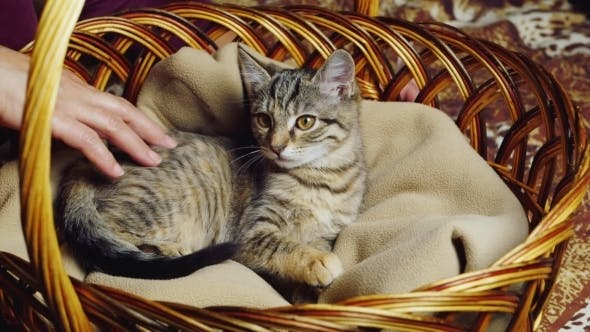 Cover Image for Kitten Sitting In a Basket