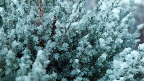 The First Snow Falls On a Tree