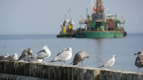 Thumbnail for Seagulls Sit On The Breakwater In The Foreground