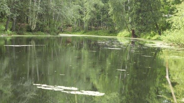 Thumbnail for Rain On The Pond