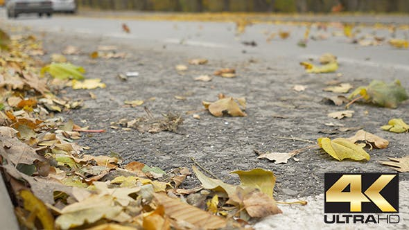 Thumbnail for Wind Spreading Leaves on Street