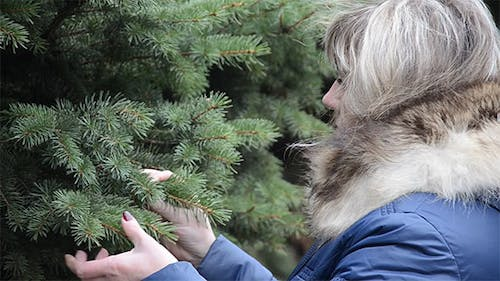 Woman Touches Twig Spruce