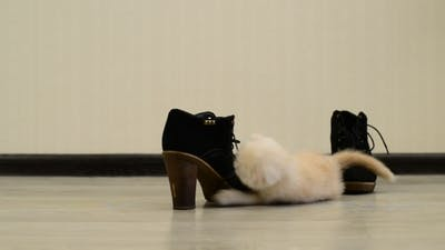 Beige Kitten Playing With  Shoe