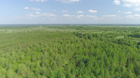 Thumbnail for Green Forest Aerial View