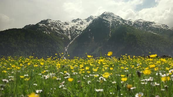 Thumbnail for Wonderful Forested Mountain in Meadow With Yellow Flowers