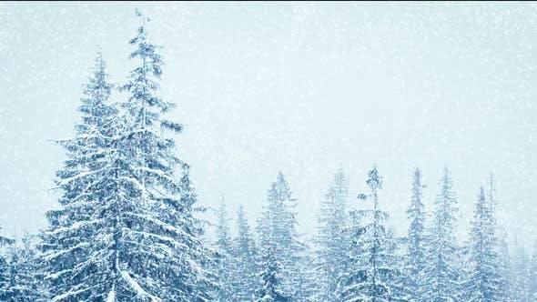Schöner flauschiger Schnee auf Ästen