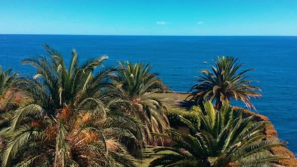 Cover Image for Palm Trees on the Sea Background