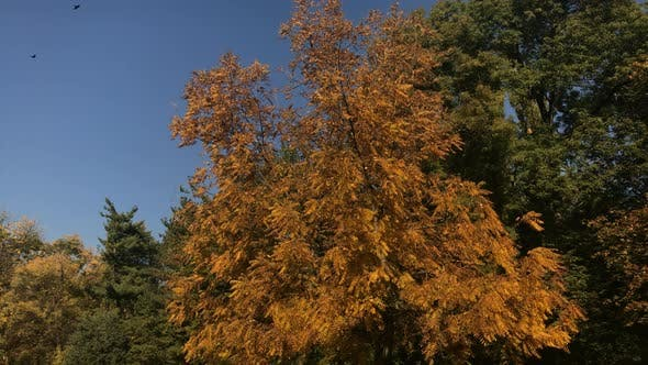 Thumbnail for Tilting scene of nature by  the autumn  3840X2160 UltraHD footage - Orange and yellow colors in the