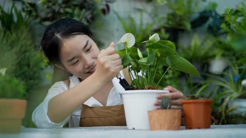 Portrait of a young asian female gardener planting tree in pot