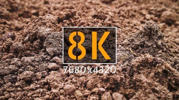 Cover Image for Soil
