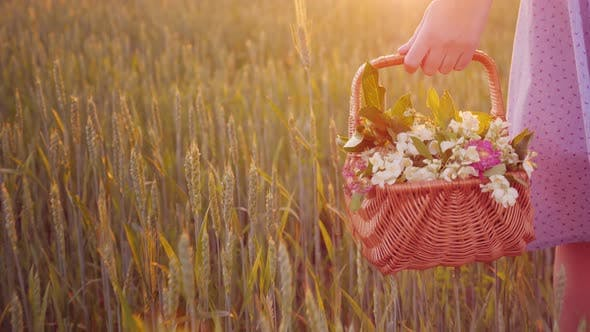 Thumbnail for Gehen mit einem Korb in der Hand auf dem Feld bei Sonnenuntergang. Im Korb sind ein Blumenstrauß von wilden Blumen