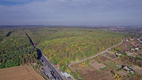 Early Autumn in Forest Aerial Top View