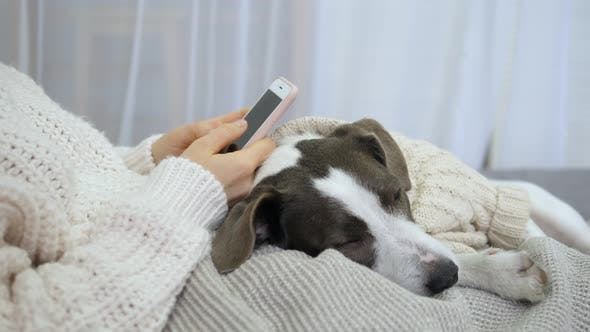Thumbnail for Cozy Lifestyle, Home, Technology. Girl With Dog In Bed Using Smartphone