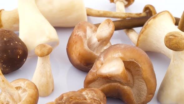 Thumbnail for Several Shiitake and Eryngii Mushrooms