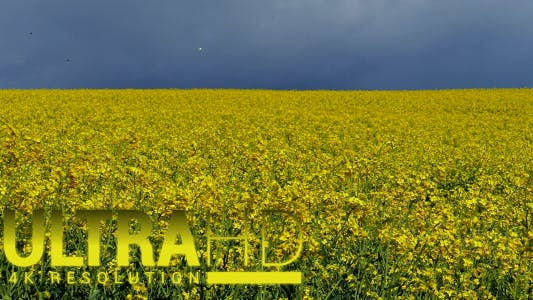 Thumbnail for Yellow Rabitz Agricultural Levels 1