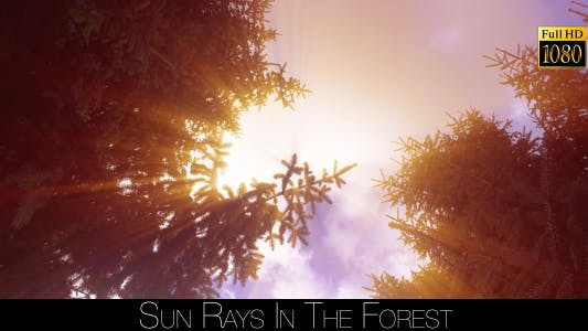 Thumbnail for Sun Rays In The Forest