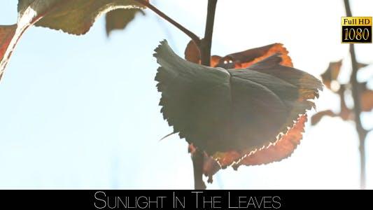 Thumbnail for Sunlight In The Leaves 78
