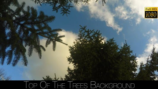 Thumbnail for Tops Of The Trees 3