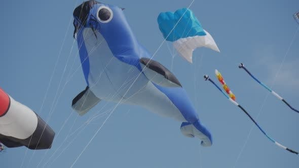 Thumbnail for Hair seal kite - Kites of All Kinds And Shapes on