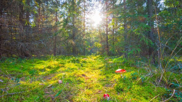 Magic Forest And Toadstools