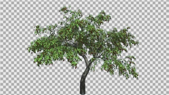 Thumbnail for Cherry High Swaying Tree Branches Green Swaying