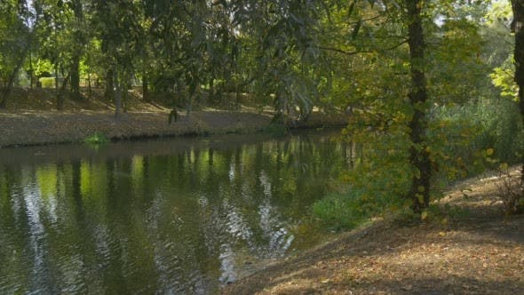 Thumbnail for River Water Green Grass Green Bushes Green Trees