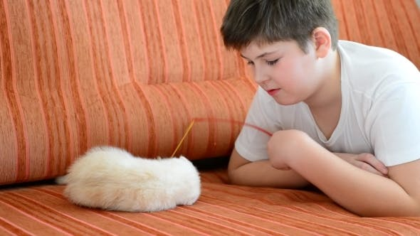 Thumbnail for Teenage Boy Playing With a Kitten On  Couch