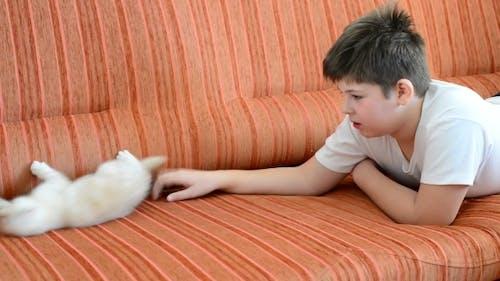 Boy Is Allergic To Cat