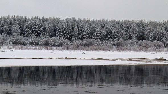 Thumbnail for Coniferous Forest in Winter on River