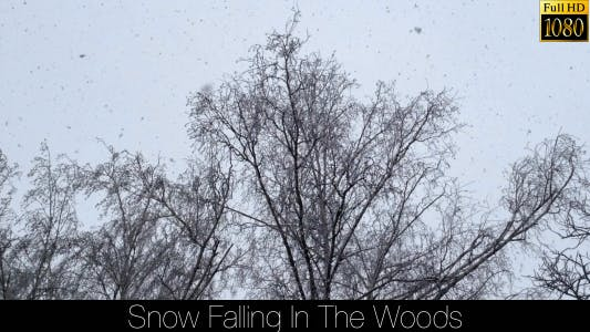 Thumbnail for Snow Falling In The Woods 2