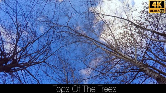 Thumbnail for Tops Of The Trees