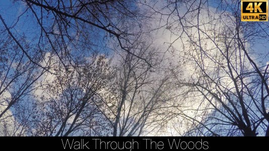 Cover Image for Walk Through The Woods 33
