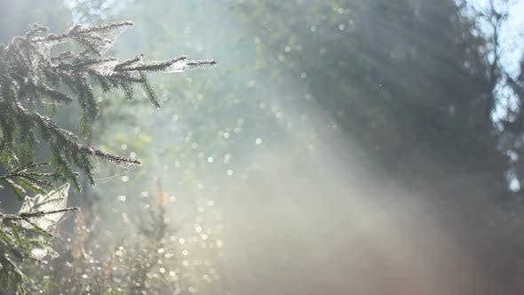 Thumbnail for Forest In Fog 13